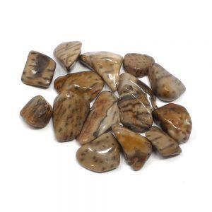 Palm Wood, tumbled, 2oz All Tumbled Stones bulk palm wood